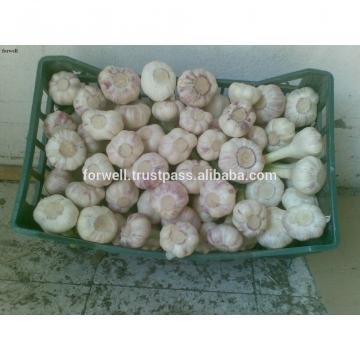 Best Price Natural Chinese Fresh Red / white Garlic