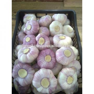 Best Price Natural Chinese Fresh Red / white Garlic