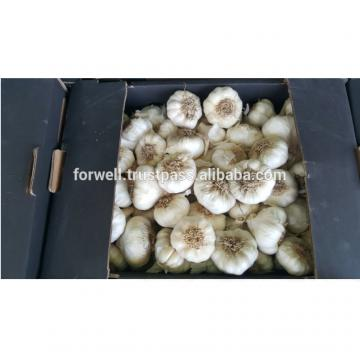 promotion Best Price Natural Chinese Fresh Red / white Garlic 2017