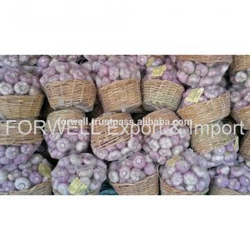 best price products new crop pure white fresh garlic