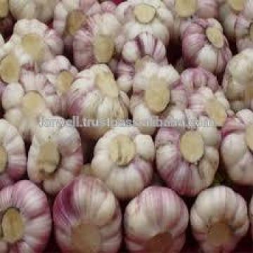 AMAZING STYLE Egyptian Garlic..RED AND WHITE GARLIC