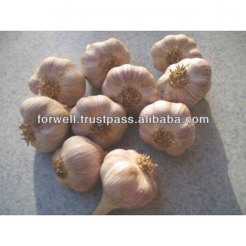 NOVEL Fresh Egyptian Garlic...NATURAL GARLIC