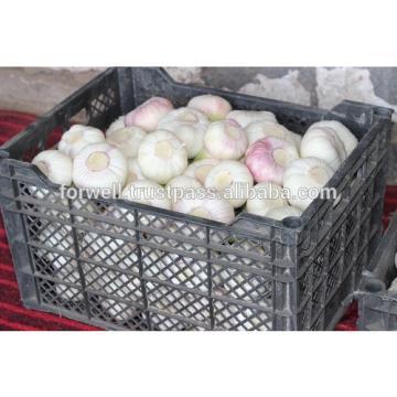 Best Price White Natural Fresh Garlic