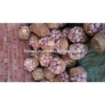 Egyptian fresh garlic (Red, White) for export