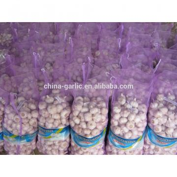 2017 new crop cold storage china fresh garlic