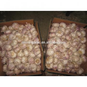 China Garlic Type and Fresh Style