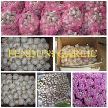Supply China Garlic New Season 2017 Crop - cheap price