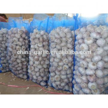 2017 Best price high quality solo fresh garlic