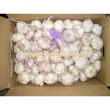 2017 Chinese fresh elephant garlic price for garlic importer