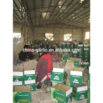 chinese natural garlic on sale garlic benifit for health fresh garlic