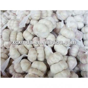 Whole White Garlic