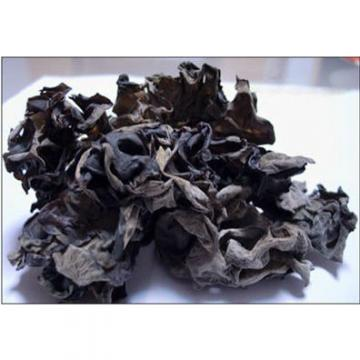 2015 New black fungus