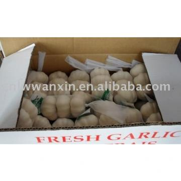 chinese new Fresh garlic