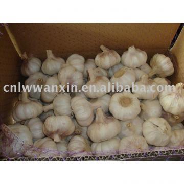 supply fresh garlic origin from china