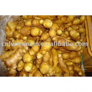 2010 crop fresh ginger