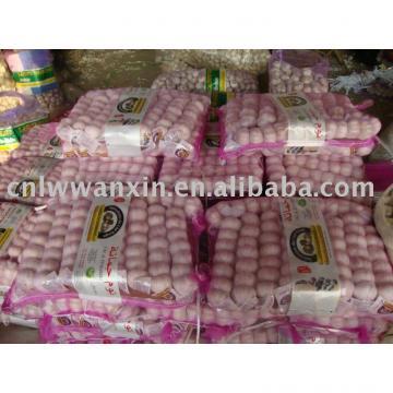 china fresh garlic for good quality