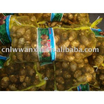 supply chinese fresh taro