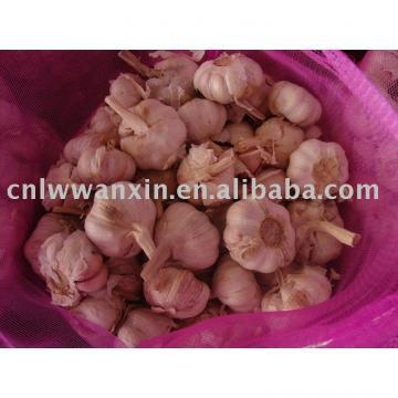 kaihua garlic