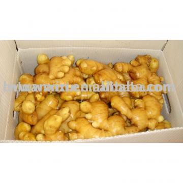 ginger 10kg pvc carton