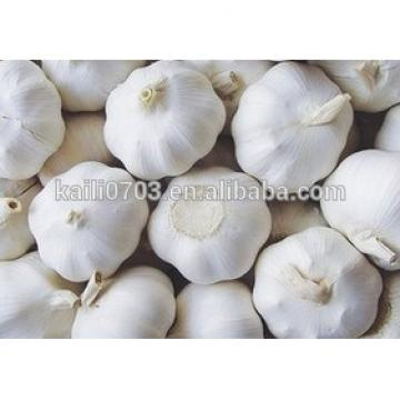 2015 Natural Fresh white garlic wholesales
