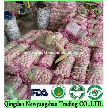 [HOT] Pure white garlic/white garlic Professional exporters