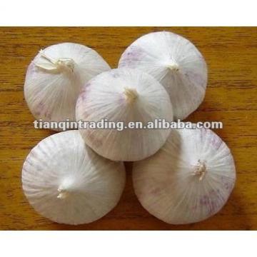 2017 freshc solo garlic