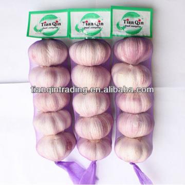 Jinxiang fresh garlic 2017