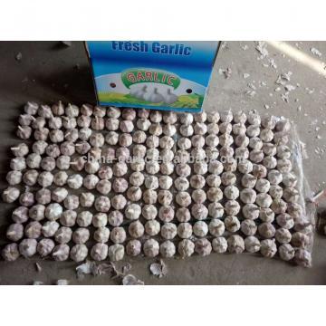 Garlic Price - Sizes 4.5cm 5.0cm 5.5cm 6.0cm -Fresh New Crop