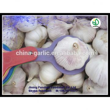 chinese supplier 50mm+ Fresh Garlic to global market