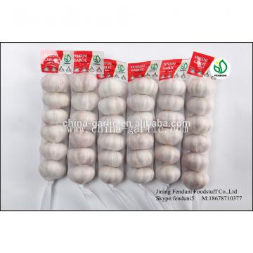 hot sale high quality garlic seed price