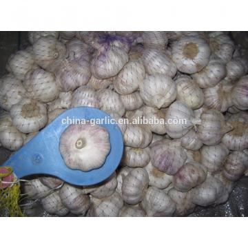 Size 45mm 50mm 55mm 60mm fresh garlic factory directly supply