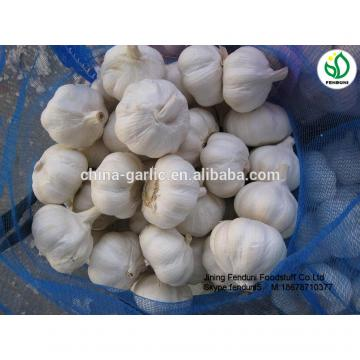 China garlic price/Natual Jinxiang garlic/ Garlic exporters china