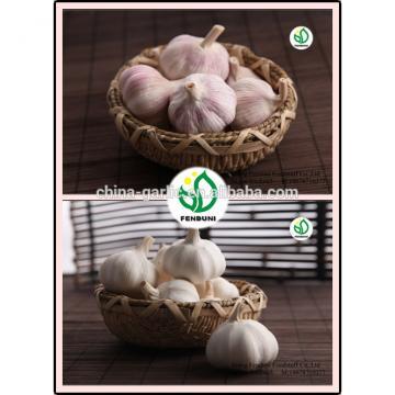 2017 new crop China cheap garlic for wholesale
