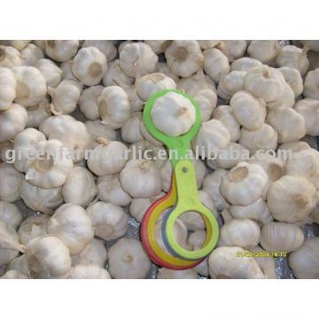 2017 chinese fresh garlic 5.0-6.0cm