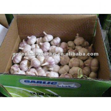 chinese white garlic as lowest price in jining