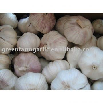 2011 clod room chinese fresh garlic