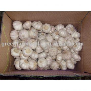chinese fresh garlic