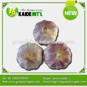 China Super White Garlic Exporter