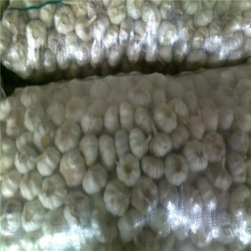 NORMAL WHITE GARLIC RAW MATERIAL