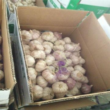 NORMAL WHITE GARLIC WITH 10KG CARTON LOOSE PACKAGE