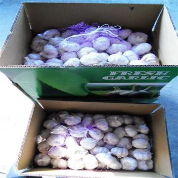 10KG CARTON PACKAGE FOR FRESH GARLIC PRODUCTS