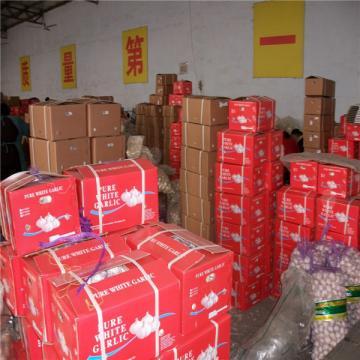 CHINA GARLIC FACTORY