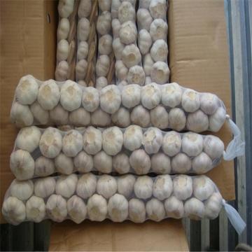 CHINESE  GARLIC 1KG BAG 10 BAGS PER CARTON,