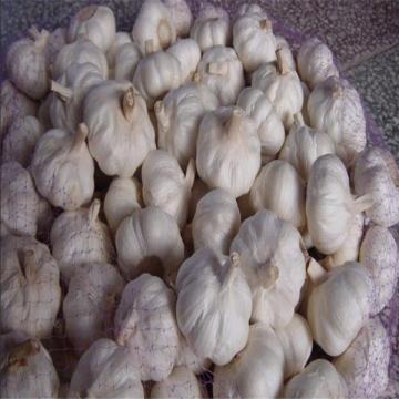 CHINA NORMAL WHITE GARLIC RAW MATERIAL