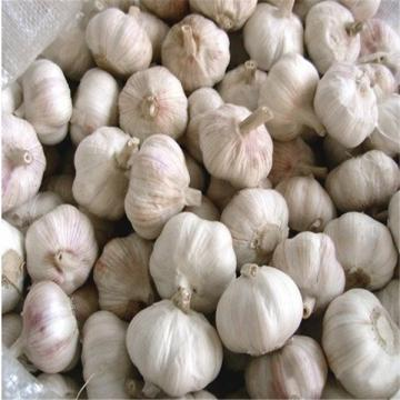 NORMAL WHITE GARLIC RAW MATERIAL FROM CHINA