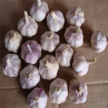 NORMAL WHITE GARLIC RAW MATERIAL FROM CHINA FACTORY