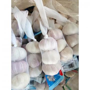 3PC/BAG 10KG CARTON  NORMAL WHITE GARLIC