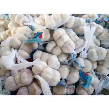 3PC/BAG 10KG CARTON NORMAL WHITE GARLIC  JINXIANG ,JINING,CHINA