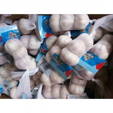 CHINA NORMAL WHITE GARLIC  3PC/BAG 10KG CARTON