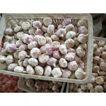 CHINA NEW CROP GARLIC WITH CARTON PACKAGE TO SANTOS,BRAZIL